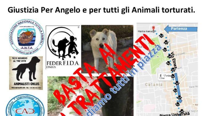 Condannati gli uccisori del cane Angelo di Sangineto