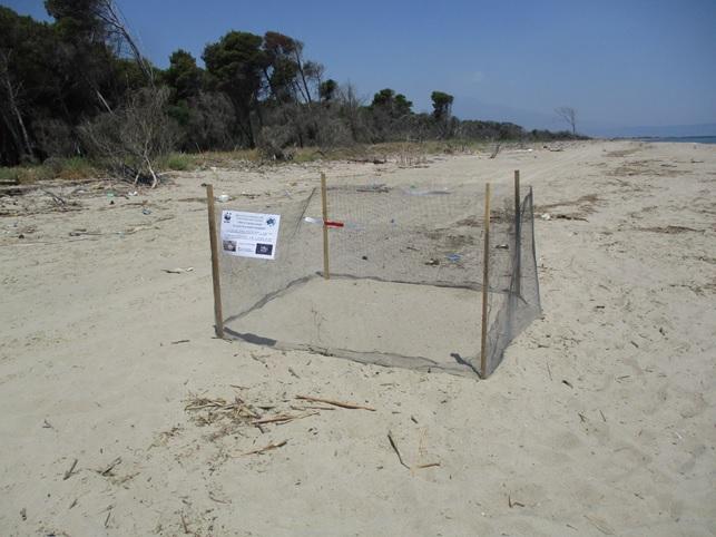 Oasi del Simeto: nuovo nido di tartarughe