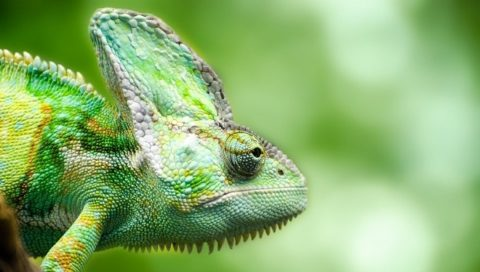 La metamorfosi camaleontica grillina