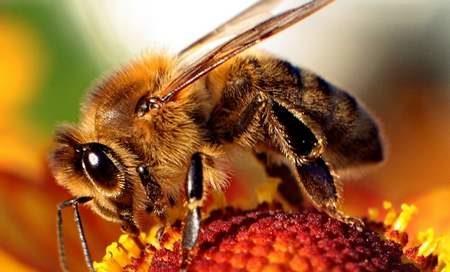 Oggi 20 Maggio, giornata mondiale delle api.