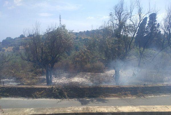 Incendio Parco Monte Po a Catania, il comitato Romolo Murri chiede immediati interventi