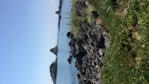 """Il Comitato Cittadino """"Difesa Mare"""" scrive alla Capitaneria di Porto di Catania: SERVE individuare i responsabili di danno ambientale aggravato e continuato a tutela del mare"""