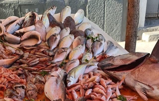 Riflessioni sulla Pesca. Occorre cambiare rotta. basta soldi a pioggia per progetti inutili